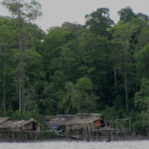 Mangroves and huts