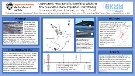Poster 5: Opportunistic photo-identification of blue whales in New Zealand to enhance population understanding