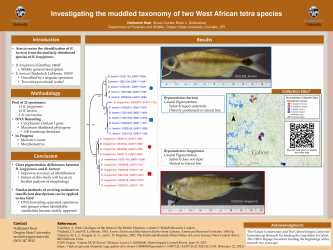 Poster 11: Investigating the muddled taxonomic status of two African tetra species