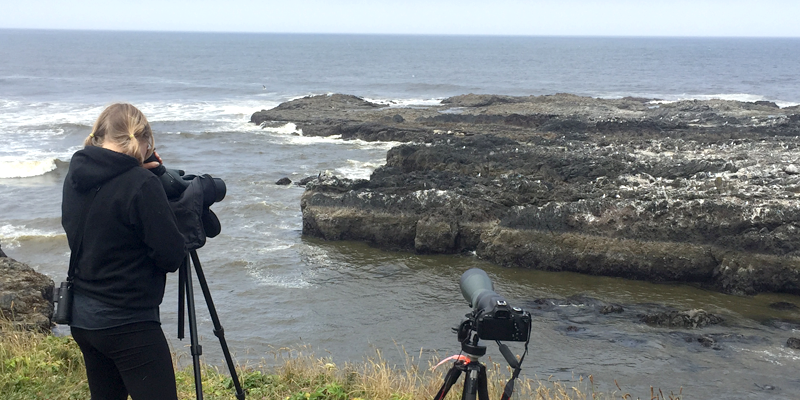 Student taking photos of sea birds from a distance